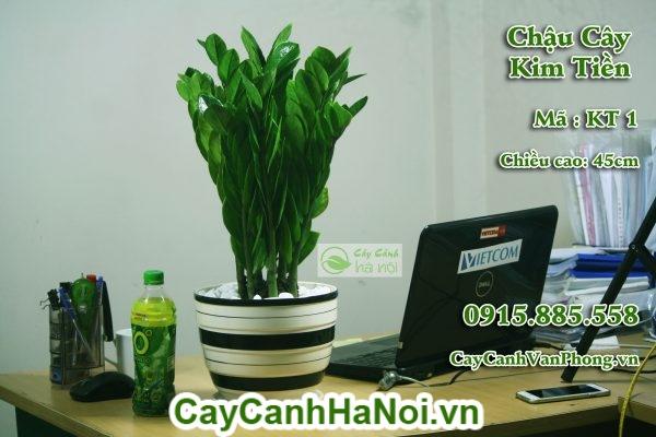cay-kim-tien-5