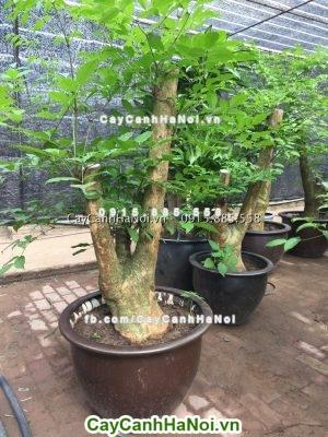 Cây hợp tuổi- cây xanh phong thủy rước lộc may vào nhà