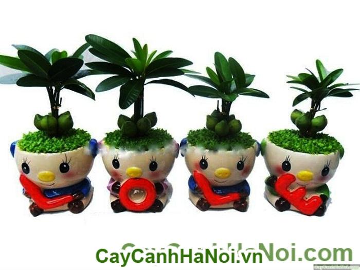 cho-thue-cay-canh-cay-may-man-phat-tai-1