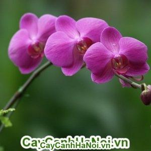 Hoa lan Hồ điệp mang hơi thở mùa xuân vào từng căn nhà nhỏ