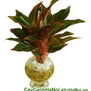 Cây cảnh nội thất và cách chọn cây sao cho hợp phong thủy