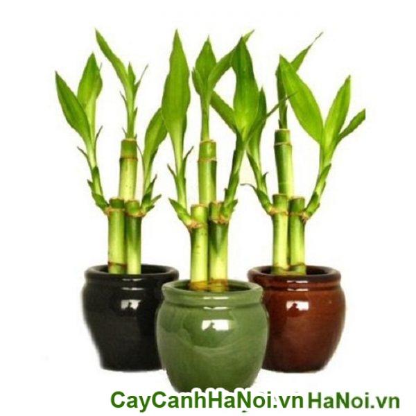 cay-phat-tai5