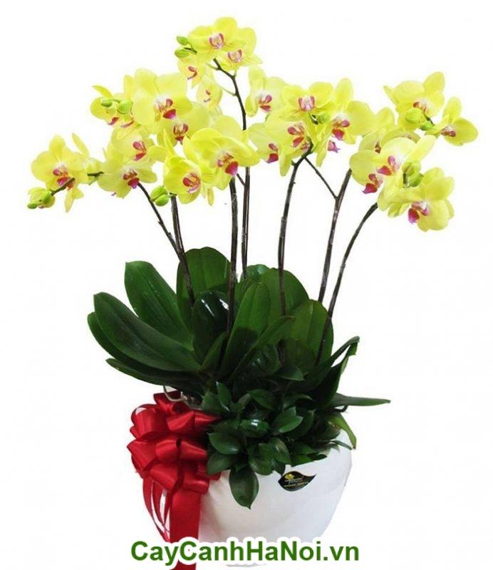 Hoa lan hồ điệp nét đẹp thanh tao, sự sang trọng, quý phái của nữ hoàng mùa xuân